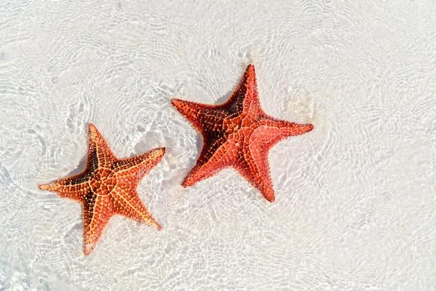 Arena blanca tropical con estrellas de mar rojas