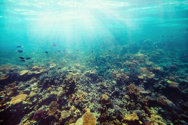 Arena de fondo en la playa bajo el agua