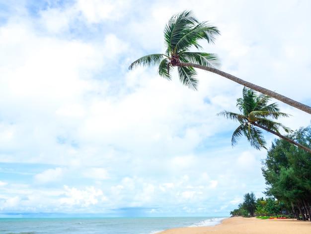 Arena de playa tropical con palmeras de coco y mar