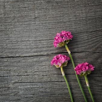 Armeria flor roja floreciente en la superficie de los tableros viejos con textura.