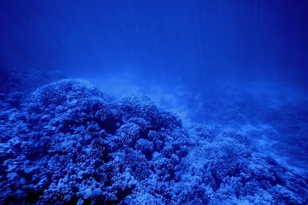 Arrecife de coral bajo el agua. en el color del año 2020 azul clásico