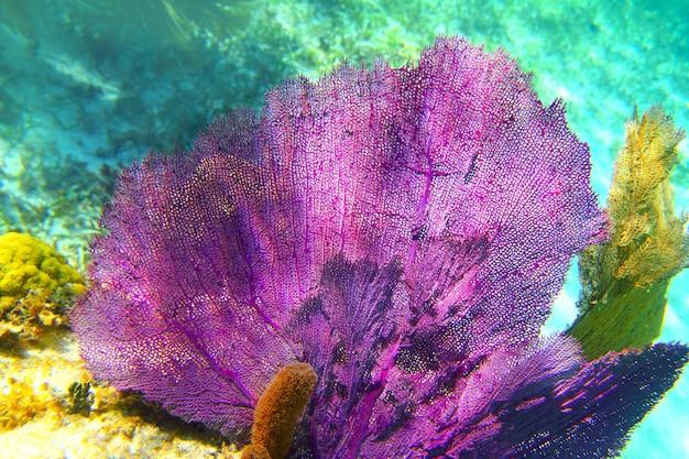 Arrecife de coral del caribe riviera maya colorido