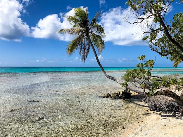 Arrecife en la isla de rangiroa