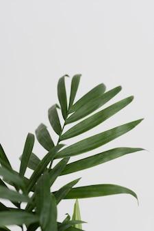 Arreglo de bodegón de planta verde