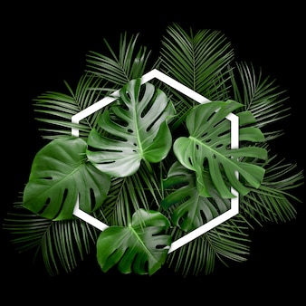 Arreglo creativo de hojas de monstera tropical con marco hexagonal