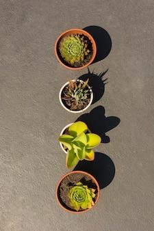 Arreglo de diferentes plantas en macetas.