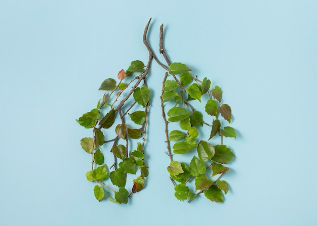 Arreglo de elementos de estilo de vida sostenible de naturaleza muerta
