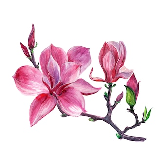 Arreglo floral, corona floral con flores de magnolia, aislado.