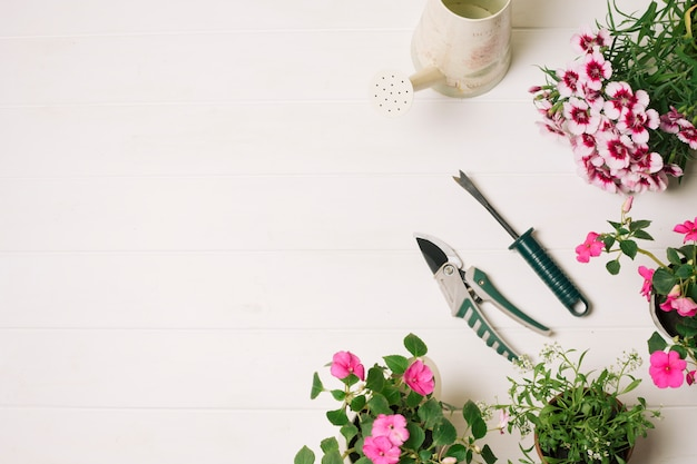 Arreglo de flores florecientes con secateur.