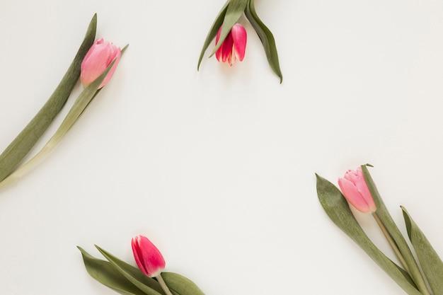 Arreglo de flores y hojas de tulipán