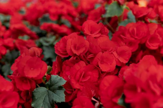 Arreglo con hermosas flores rojas