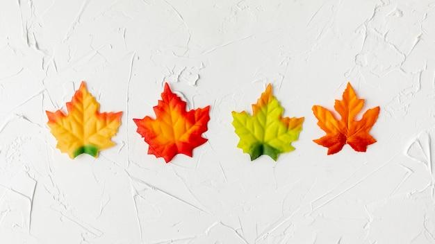 Arreglo de hojas coloridas sobre fondo blanco