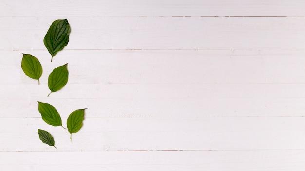 Arreglo de hojas con copia espacio.