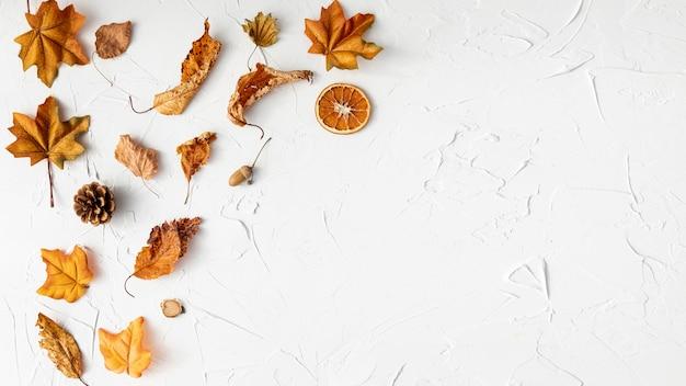 Arreglo de hojas secas sobre fondo blanco.