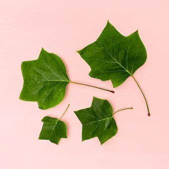 Arreglo de hojas de todos los tamaños.