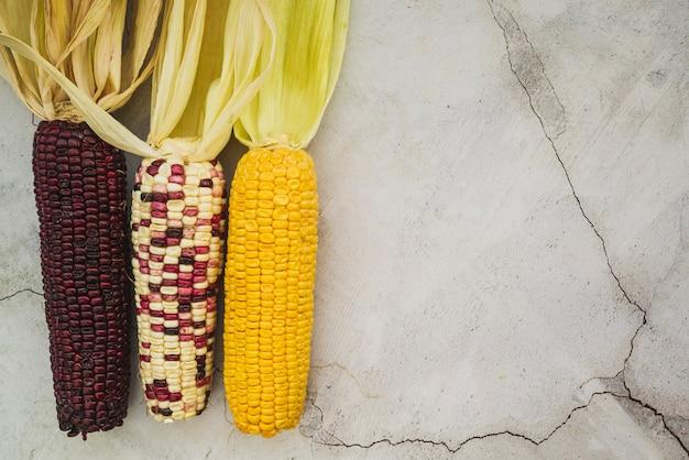 Arreglo con maíz multicolor en mazorca