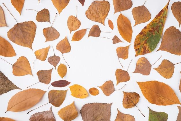 Arreglo otoñal de hojas caídas