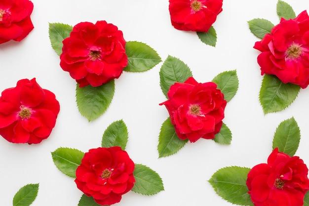 Arreglo plano de rosas de iceberg y arreglo de hojas