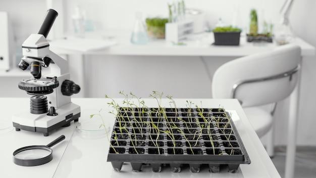 Arreglo con plantas y microscopio.
