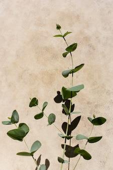 Arreglo de plantas naturales sobre fondo monocromático