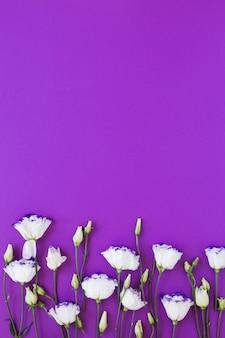 Arreglo de rosas blancas sobre fondo violeta copia espacio