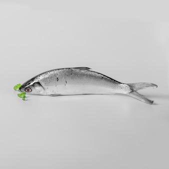 Arreglo con sabroso pescado sobre fondo blanco.