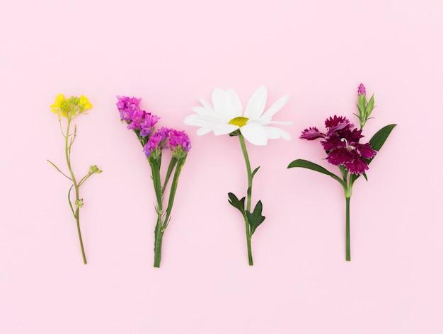 Arreglo de vista superior con diferentes flores