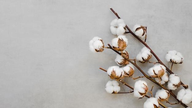 Arreglo de vista superior con flores y ramas de algodón