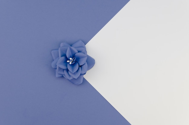 Arreglo de vista superior con pequeña flor azul