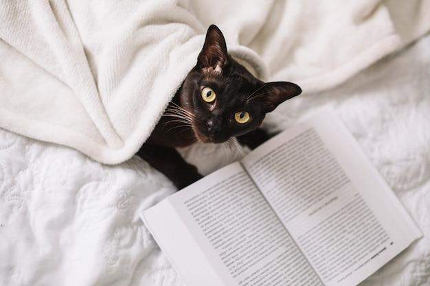 Desde arriba gato cerca del libro Foto Premium