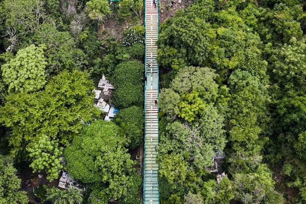 Arriba de largas escaleras en el valle en la selva tropical en el parque nacional