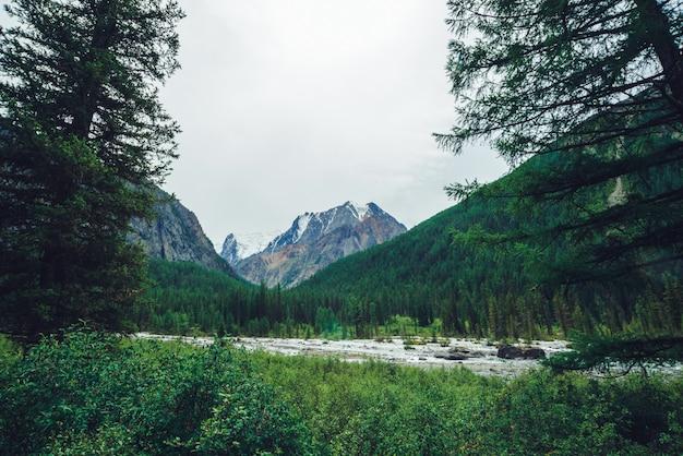 Arroyo de montaña detrás de árboles coníferos contra montañas nevadas gigantes.