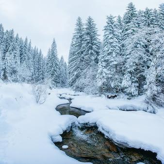 Arroyo de montaña en invierno