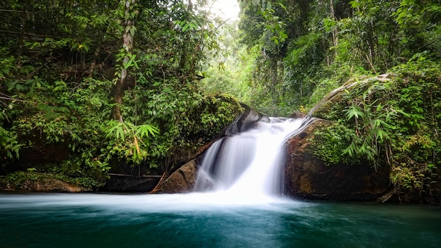 Arroyo tropical en las selvas de tailandia