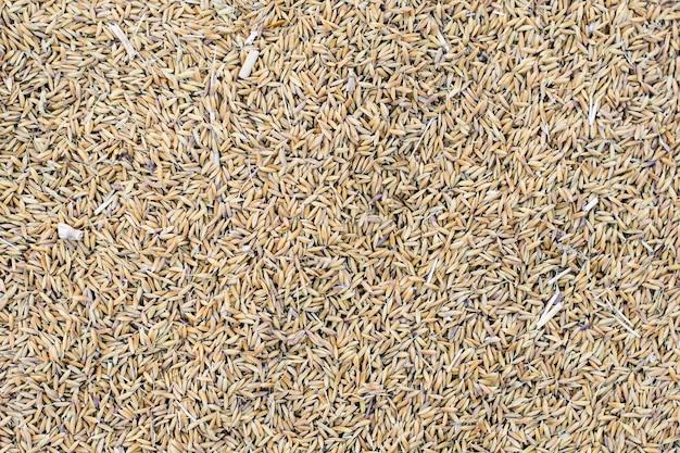 Arroz de arroz para el fondo