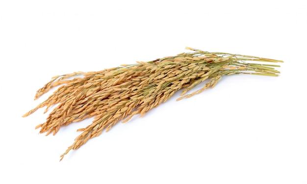 Arroz de arroz jazmín sobre fondo blanco