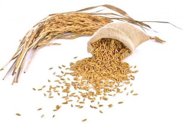 El arroz de arroz en el saco pequeño de la arpillera se aísla en el fondo blanco