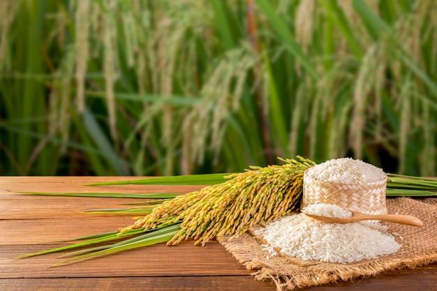 Arroz blanco tailandés (arroz jazmín)