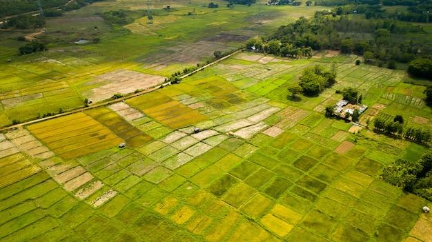 Arroz terraza toma aérea. imagen del hermoso campo de arroz terraza
