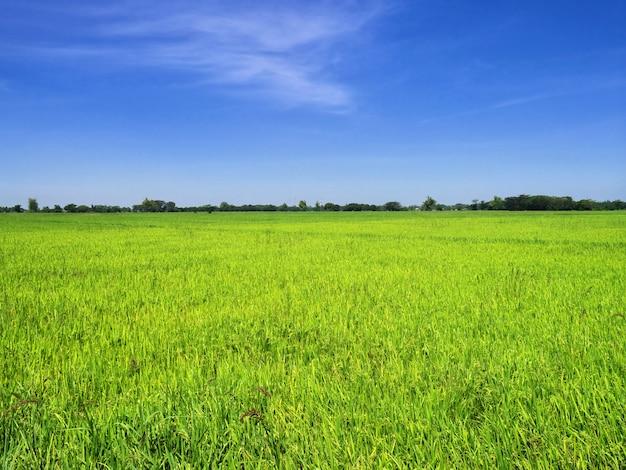 Los arrozales en filipinas