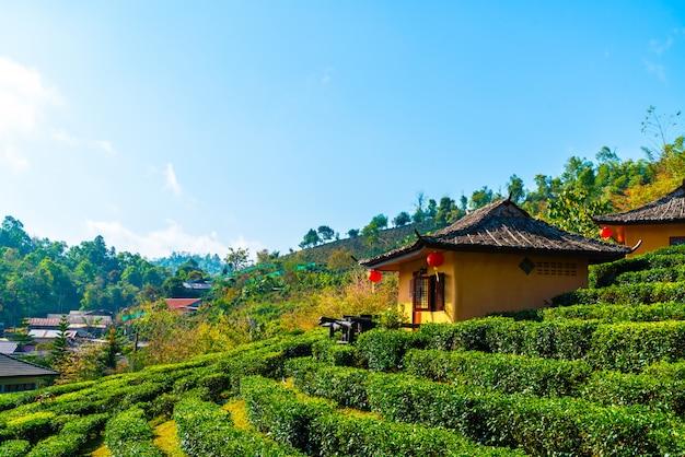 Asentamiento en campo de arroz