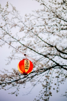 Asia linterna japón sakura crepúsculo