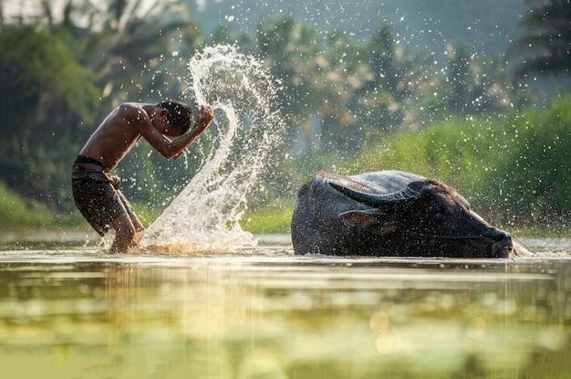 Asia niño en búfalo de río