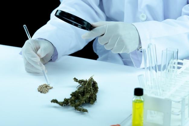 Asimiento de la mano del médico y oferta al paciente de marihuana medicinal y aceite.