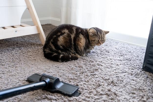 Aspirador gato desparramado limpiando el cabello del gato caído