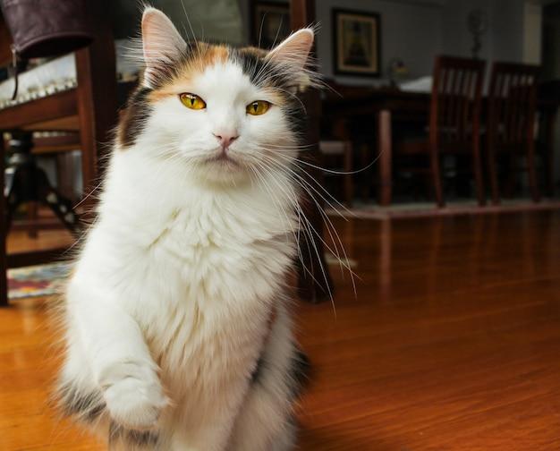 Atento gato joven pateando en casa