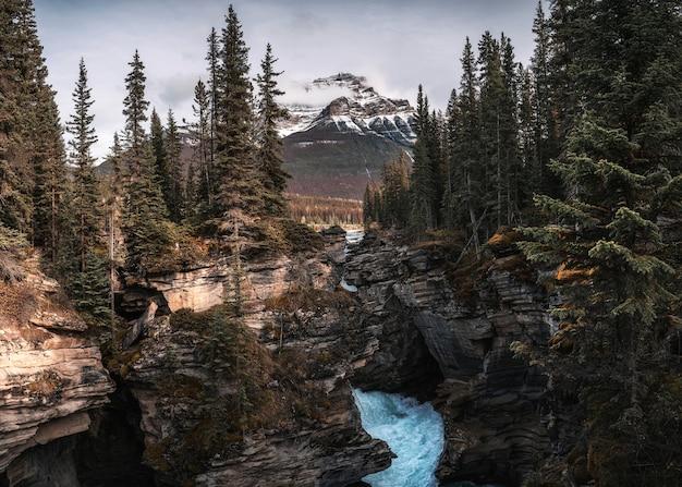 Athabasca falls fluye en el cañón con montañas rocosas en el bosque de otoño en el parque nacional jasper