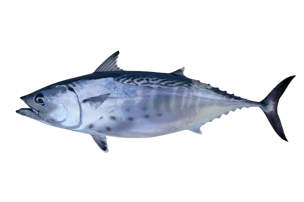 Atún captura poco atún pescado atlántico marisco
