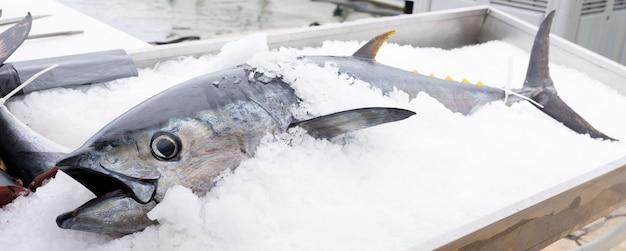 Atún en hielo en el mercado