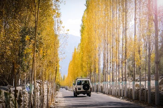 Un automóvil corre en el camino hacia khaplu entre las hojas amarillas de los álamos en otoño.